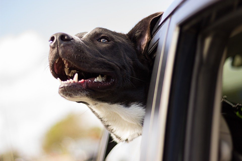 Premier Auto Detailing Blog: need to remove pet hair from your car? We have quick and easy tips just for you.